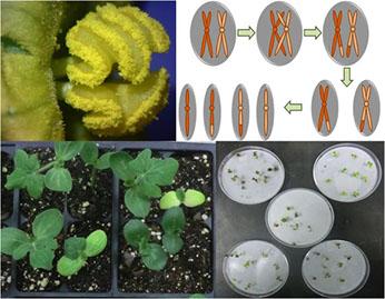 Plant Breeding